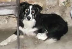 """Este es nuestro perro, su nombre es """"Duque"""", lleva 3 días desaparecido, si alguien le encuentra que se ponga en contacto con la Quesería Bedon!. Telf...609613966 Muchas gracias!"""