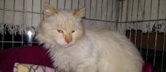 Hola, mi nombre es Donny. Soy un gato adulto. He vivido muchos años en una colonia controlada con otros gatos, soy muy cariñoso y bueno. Soy un gato muy bonito, con un pelo largo y blanco. Tengo muchas ganas de estar en un hogar para dar y recibir mimos cada día. Tengo muchas ganas de volver a estar en un hogar y con una familia que me quiera mucho. Estoy esterilizado, vacunado, chipado, testado negativo de inmunodeficiencia y leucemia y desparasitado interna y externamente. ¿Quieres conocerme? Rellena el formulario, gracias. http://www.eljardinetdelsgats.org/es/para-acoger/donny/